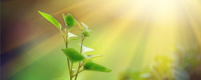 Sustainability_Software_Banner.jpg