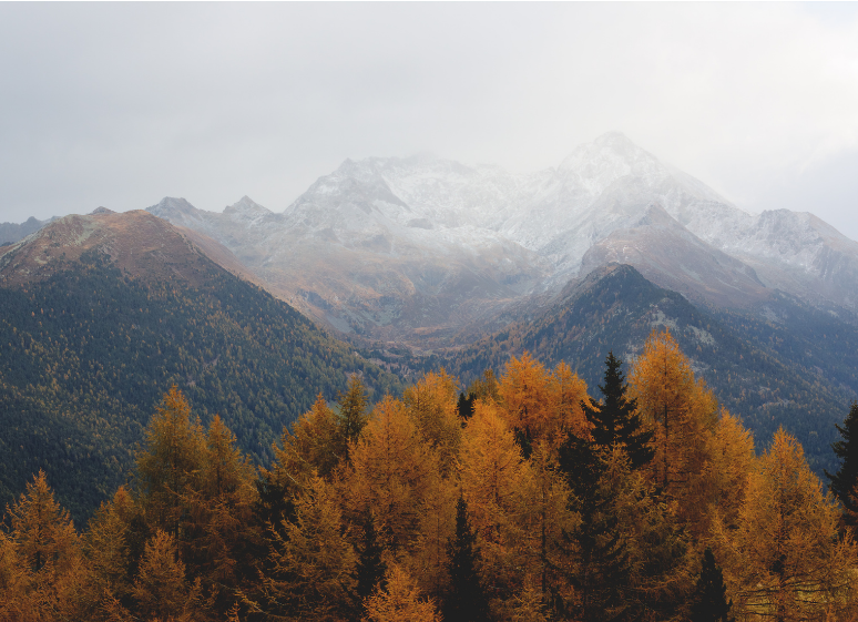 fall trees mountains
