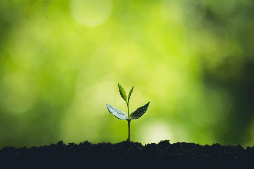 sustainability plant growing