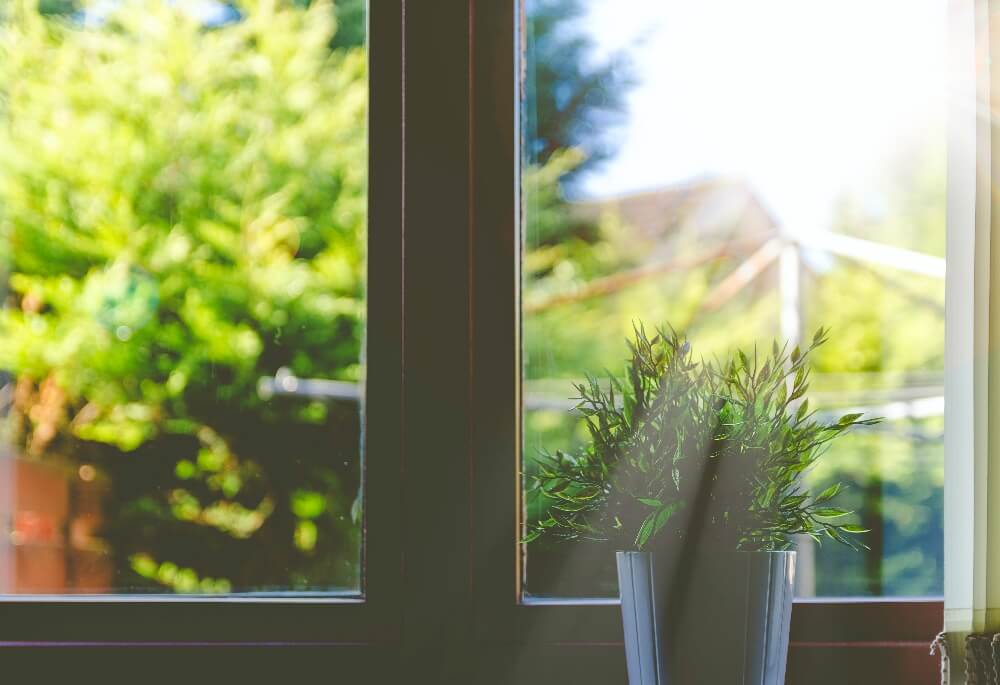sunlight coming through window and plant
