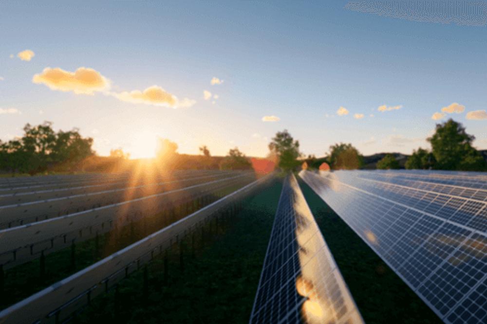solar panels in green field